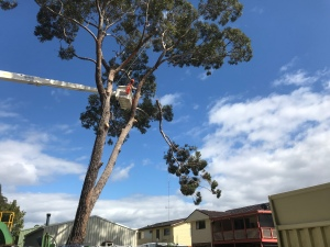 Visit inlettreeservices.com.au for cherry picker hire, gum tree limb removal, tree removal and arborist in sanctuary point, vincentia, sussex inlet, nowra, Bay & Basin, Huskisson and shoalhaven surrounds.